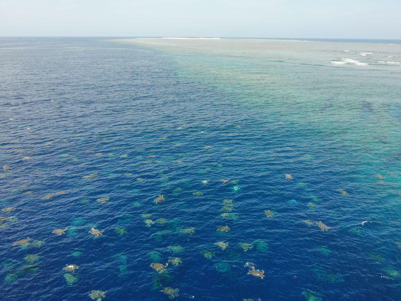 アオウミガメの保護と研究を担う「レイン・アイランド・リカバリー・プロジェクト」は、2019年12月にドローンを用いて海面の様子を撮影した写真
