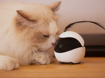 猫用ロボット「Ebo(イーボ)」製品写真