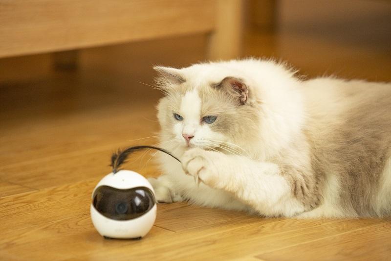 猫用ロボットEbo