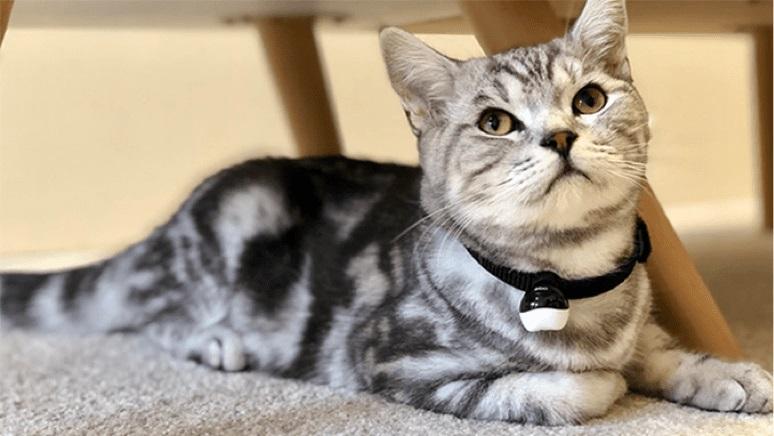 猫用ロボット「Ebo(イーボ)」上位モデルEbo Proにセットされている専用のスマート首輪を活用すると、大切な猫ちゃんの歩数や健康状態など管理する事が出来ます。