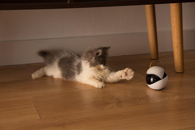 猫用ロボット「Ebo(イーボ)」猫の動きと気持ちを分析し行動を最適化