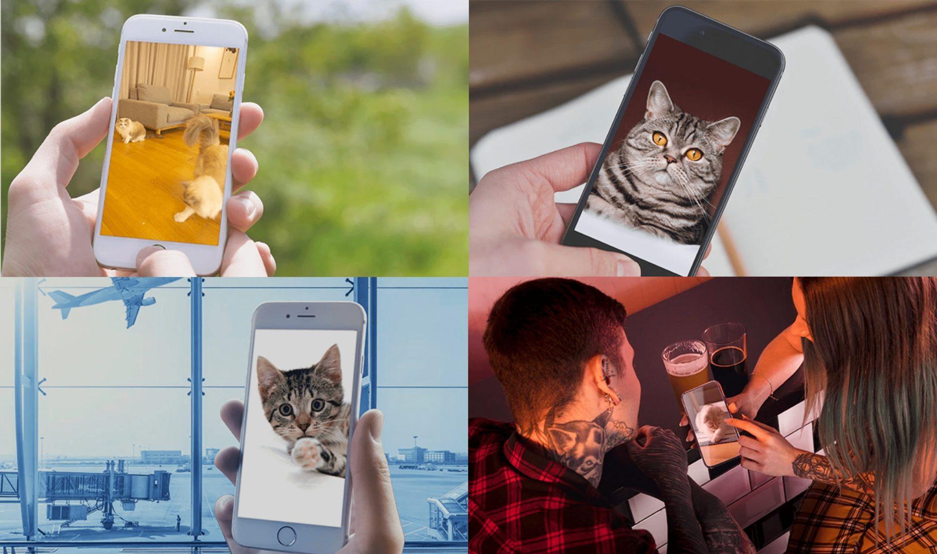 猫用ロボット「Ebo(イーボ)」世界中どこからでも猫ちゃんに会える