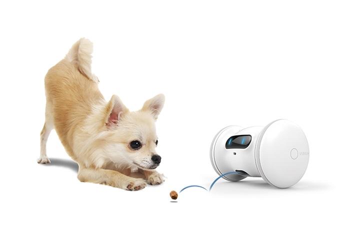 犬猫兼用「VARRAM PET FITNESS(バレム・ペット・フィットネス)」とは?お留守番中の遊び相手ロボット友達を紹介!